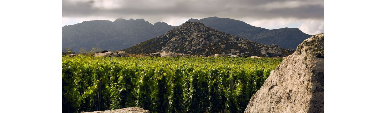 T-Oinos winery - In Le monde - Wimbledon Wine Cellar