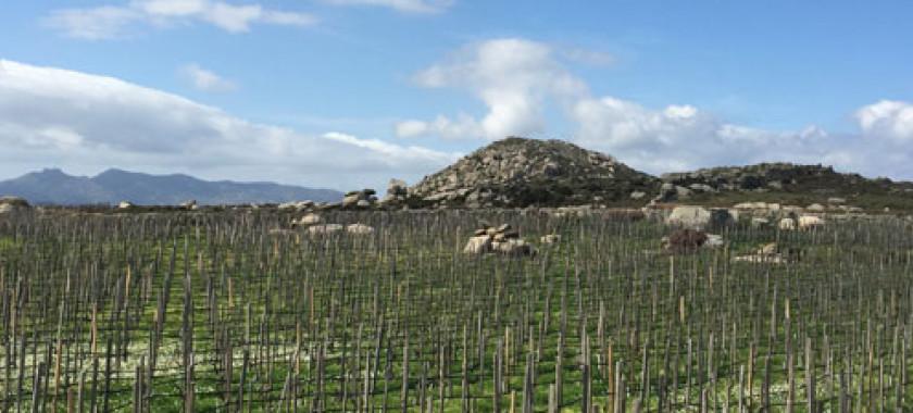 T-Oinos Vineyards