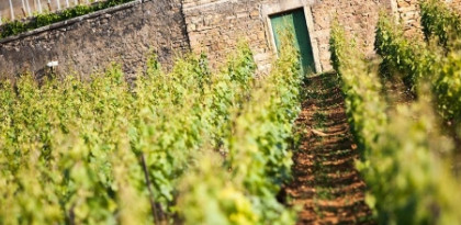Domaine Chanson - wimbledon wine cellar